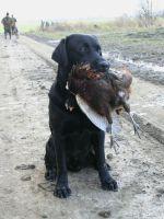 Jagtetik