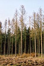 Angrebet skov. Foto: Søren Fodgaard, Dansk Skovforening.