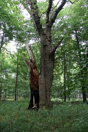 PEFC certificeret skov