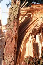 Skov Produktansvarsforsikring