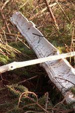 Skov - Basisforsikring