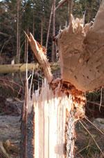 Stormfaldsforsikring Skov
