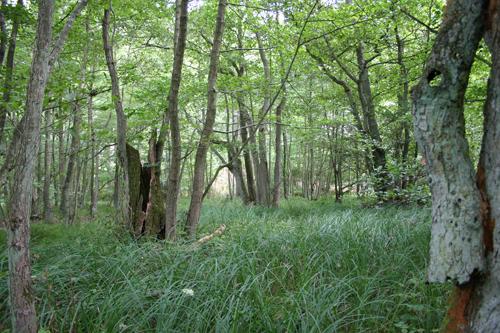 Ellesump i Natura 2000 område