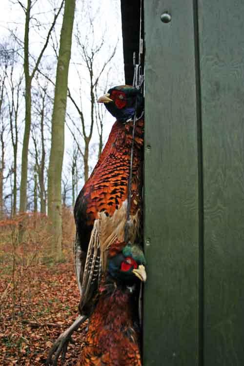 Find skove der leje jagt ud til private og læs om Jagtetik.