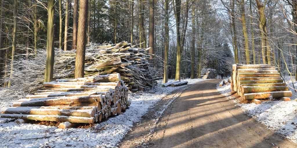 I Danmark betales der omkring 450 kr. pr. m3 rødgran til konstruktionstræ, mens prisen på flis typisk vil være under 200 kr. pr. m3. Der er ingen skovejer, der ønsker kun at sælge sit træ til #flis.