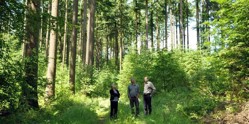 En højere arveafgift på skovejendomme vil mindske investeringer i udvikling, øget træproduktion, større naturindhold og skabelse af arbejdspladser.