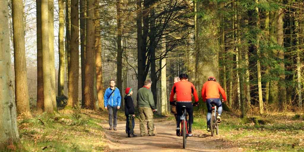 Der opstår tit konflikter mellem forskellige brugere af skovene. Foto viser gående og mountainbikere i skoven..