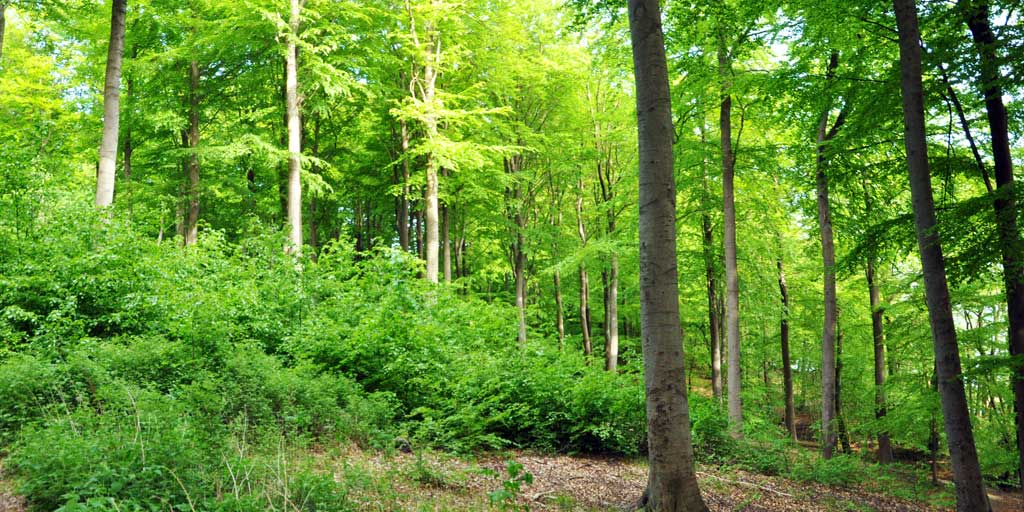 Dansk Skovforening opfordrer til incitamenter der kan fremme biodiversitet i skovene.