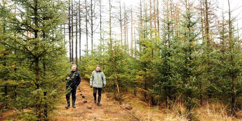 Direktør Jan Søndergaard og Skovkredsformand Mogens Lunde ved et besøg i Fromsseier Plantage.