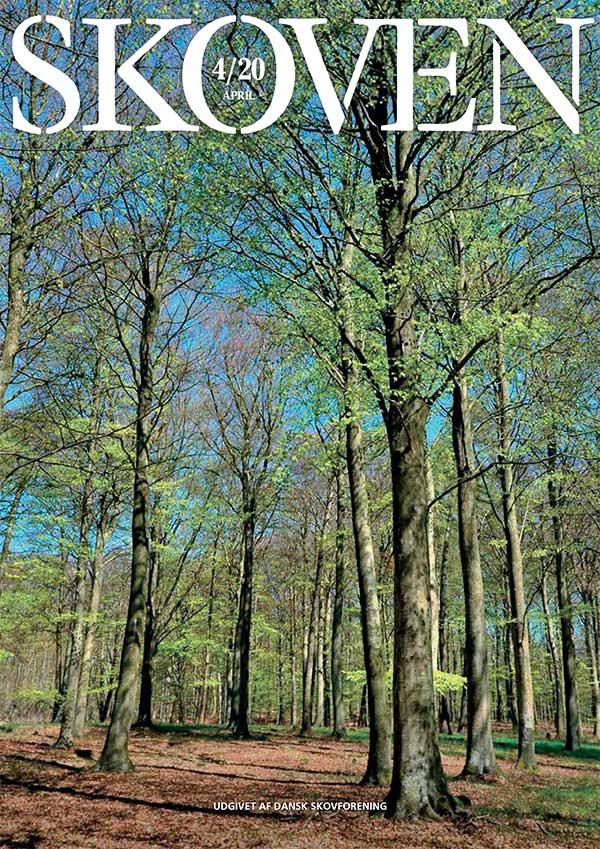 Forsiden af Skoven 4, 2020.