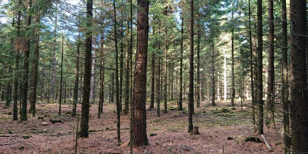 Nærringsfattige lokaliteter kan have gavn af at få tilbageført aske. Det skal fortsat være en mulighed uden at skabe unødvendigt bureaukrati for skove uden behov.