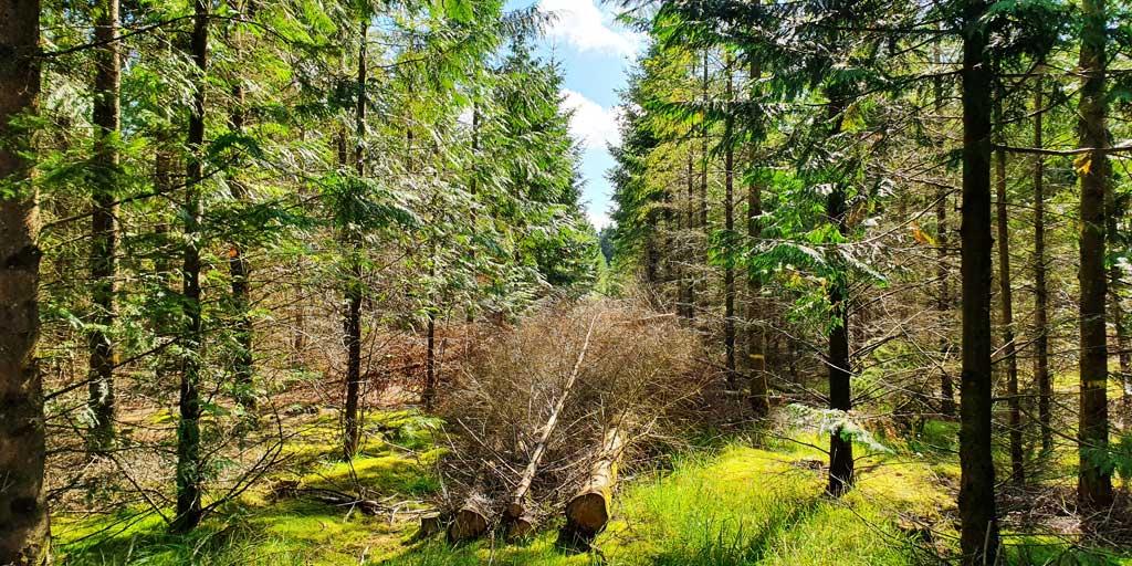 De unge træer der fjernes for at etablere spor anvendes til flis.