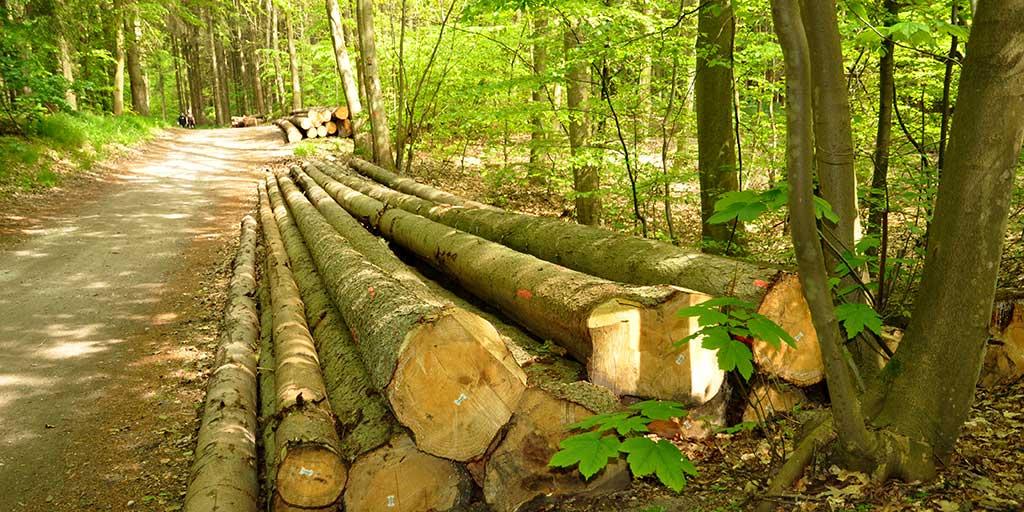 Der bliver brug for at øge produktionen af træ på andre arealer når flere skal lægges urørt