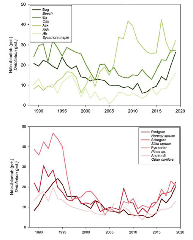 Skovstatistikkens Figur 2.1: Udvikling i gennemsnitlig blad-/nåletabsprocent for henholdsvis løv- og nåletræsarter.