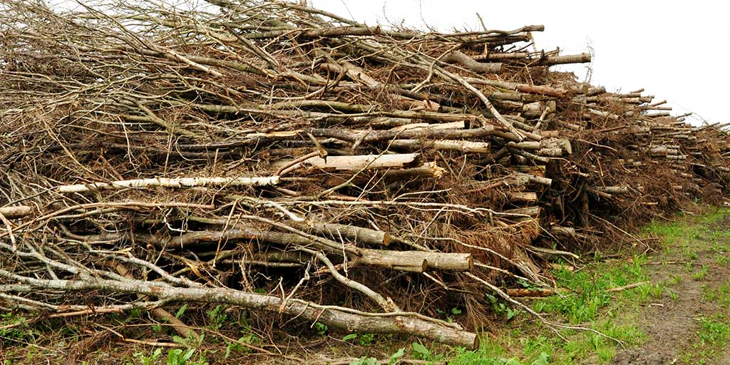 Faktasvag information forvrænger billedet af træibomassen. Bæredygtig biomasse er essentiel i den grønne omstilling.