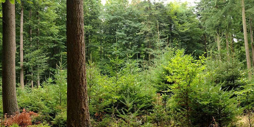 Skovbrugets bidrag til verdensmålene kan blive en efterspurgt handelsparameter og en del af skovenes kommunikation med omverdenen.