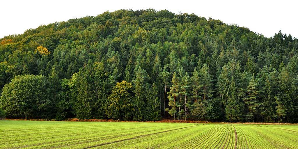 Flere skove og mere varierede skove har givet bedre vilkår for fuglelivet.