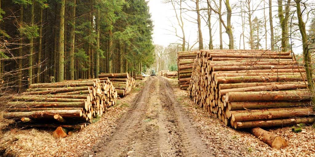 Vi skal bruge mere træ til erstatning for energitunge materialer, og vi skal bruge bæredygtigt produceret træflis som et fornuftigt alternativ til fossil energi.