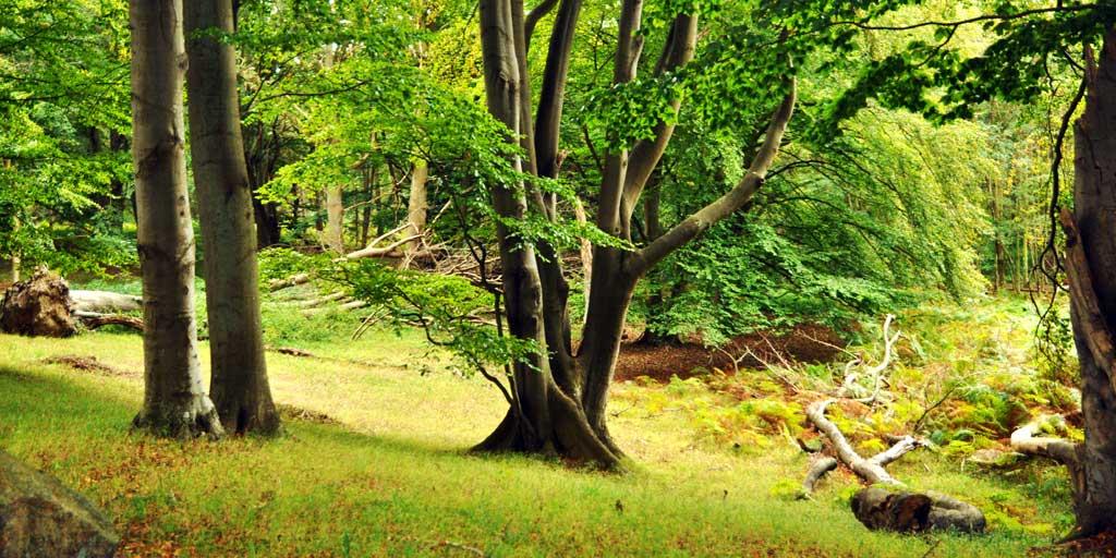 Biodiversitet i skov. Foto af privat skov på Sydsjælland.